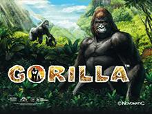 Gorilla в Вулкан Платинум